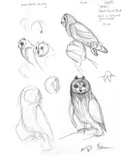 Short-eared owl sketch page © 2014 Karen A Johnson