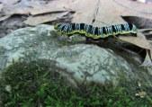 Caterpillar © 2014 Karen A Johnson