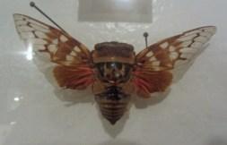 Big cicada © 2014 Karen A. Johnson