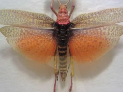 Colorful grasshopper © 2014 Karen A. Johnson