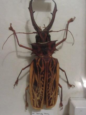 Weird beetle © 2014 Karen A. Johnson