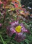Glass flower © 2014 Karen A. Johnson