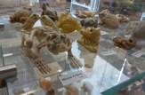 Yellow stone frogs © 2015 Karen A. Johnson