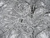 Snow covered © 2015 Karen A. Johnson