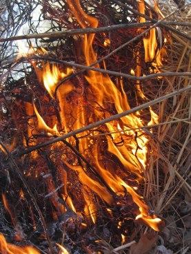 Fire 5 © 2015 Karen A. Johnson
