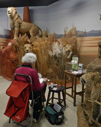 Sketching with the lions © 2015 Karen A. Johnson