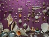 Shells © 2015 Karen A. Johnson