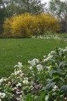 Arboretum flowers © 2015 Karen A. Johnson