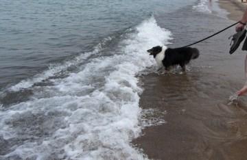 Cody barking at the waves © 2015 Karen A. Johnson