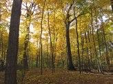 Golden forest 2 © 2015 Karen A. Johnson