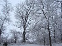 Christmas frost 5 © 2015 Karen A. Johnson