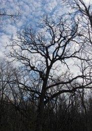 Tree and sky © 2016 Karen A. Johnson