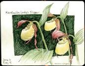 Day 4-Lady slipper orchids © 2016 Karen A. Johnson