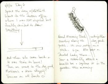 Day 6- Mourning cloak caterpillar © 2016 Karen A. Johnson