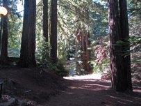 Redwood path © 2016 Karen A. Johnson