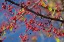 Berries © 2016 Karen A. Johnson