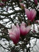 Magnolia branch © 2017 Karen A Johnson