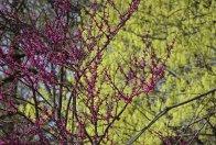 Colors of spring © 2017 Karen A Johnson