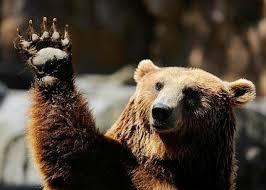 Bear Paw Art