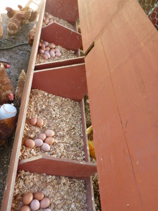 Nesting boxes allow for 2 chickens to lay at a time