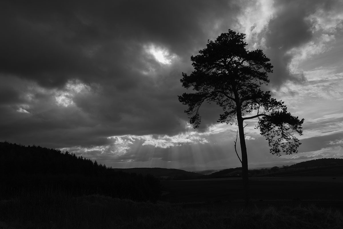 Black Isle photography - tree silhouetted under a cloudy sky with shafts of sunlight over hills and forest in background