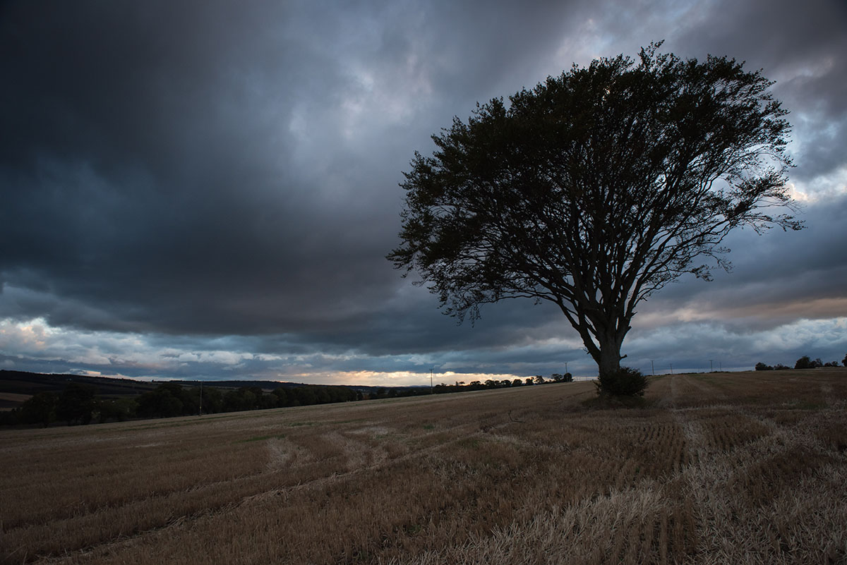 Black Isle photography - beech tree in a stubble field silhouetted against a dark sky with a band of light on the horizon