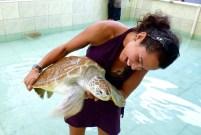 Turtle habitat, Pangandaran, Java, Indonesia - Karina Noriega