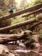 Fern Canyon, Redwood State Park, California, USA - Karina Noriega