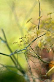 2008 - Le jardin d'Eden 03