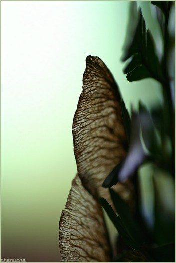 2007 - Les ailes perdues