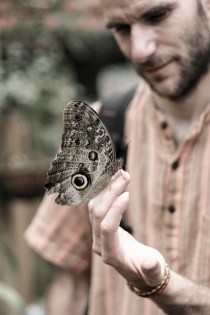 2013 - Papillons