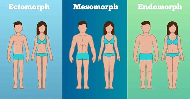 Mincir type de morphologie karinealook.com