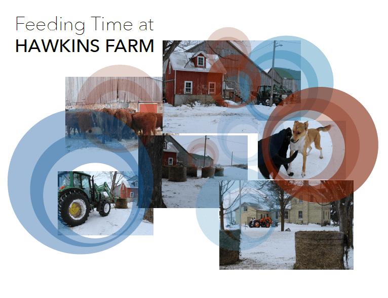 Feeding Time at the Hawkins Farm Sound Map