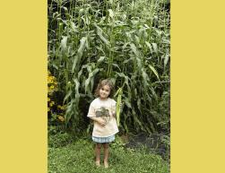 6. Chris Dedinsky: City Farmer T-Shirt Design