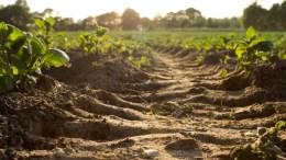 Tips Investasi Tanah Biar