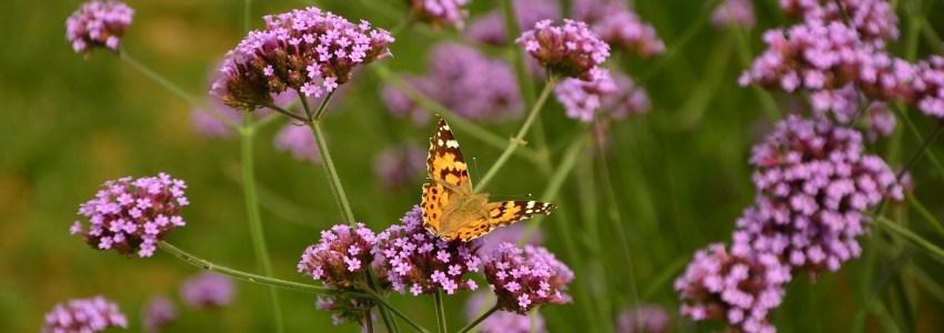 教室で蝶の観察
