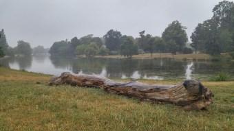Beautiful limb by the lake