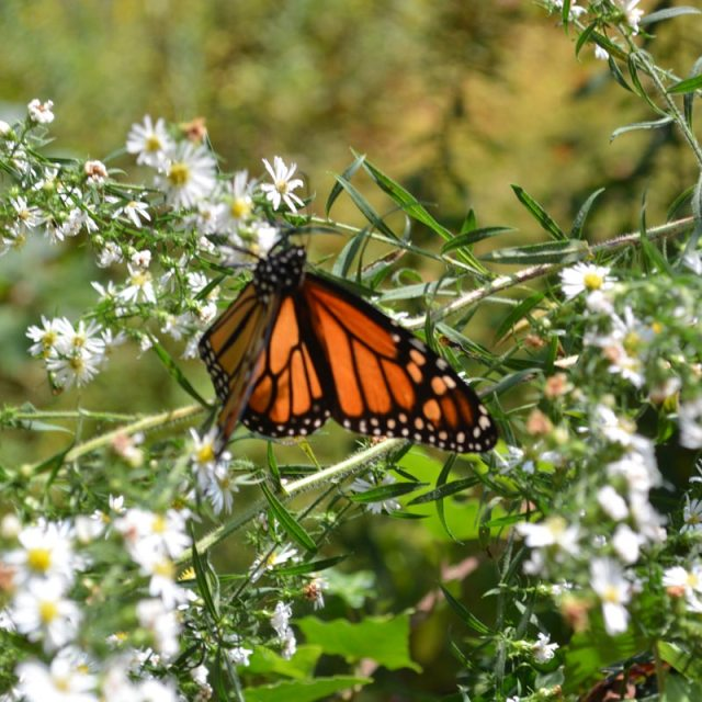 butterfly in bushes