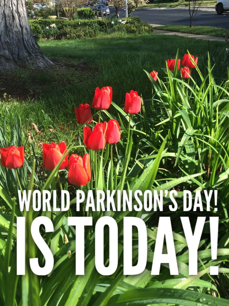 World Parkinson's Day 2021 & Raising Awareness