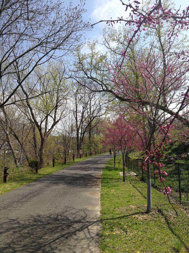 sam van aken, tree of forty fruit, karl stirner arts trail, KSAT