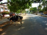 More shady streets in Mysore.