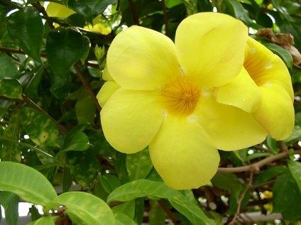 BotanicalGardenFlower