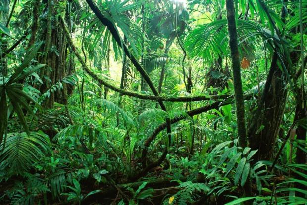 Breath of the World: Amazon Rainforest