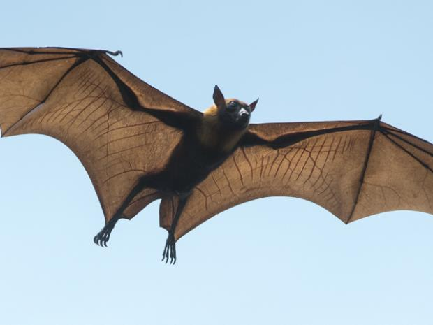 Citizen Scientists: In Search of Bats