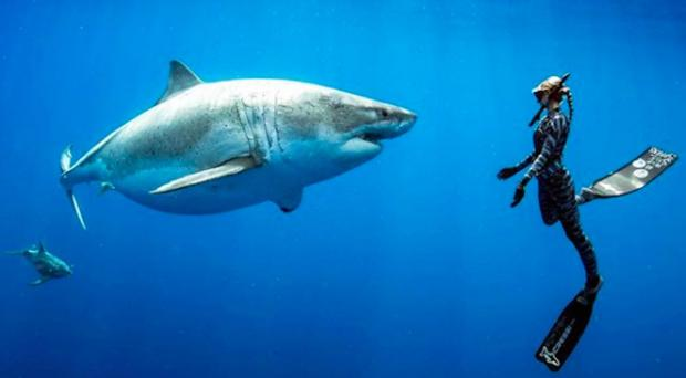 Why the World Needs Sharks