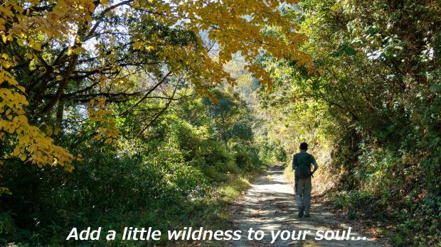 Wild Soul - A Nature Poem
