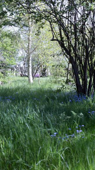 vacker trädgårdsbild