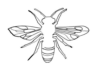 pszczolaa