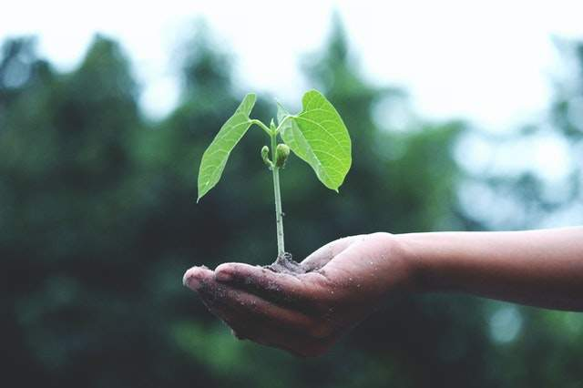 Jak rozwinąć firmę: https://www.pexels.com/photo/person-holding-a-green-plant-1072824/