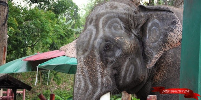 Elephant in Chiang Mai zoo